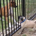 It's Playtime for These Two Dogs!