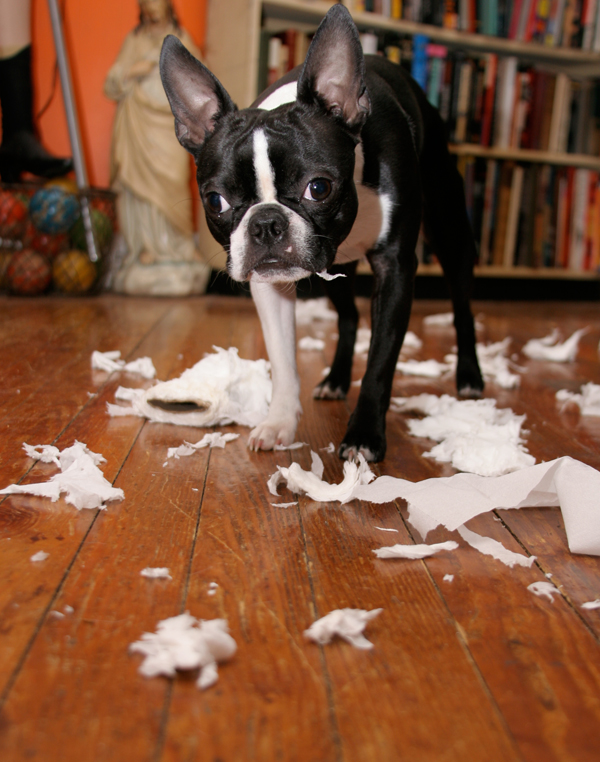 When our dog(s) is destructive it could be a cry for attention. Photo courtesy defekto, Flickr