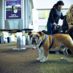 This Airline Makes Dog Travel Easier
