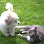 This Small Dog Loves Playing With Cats