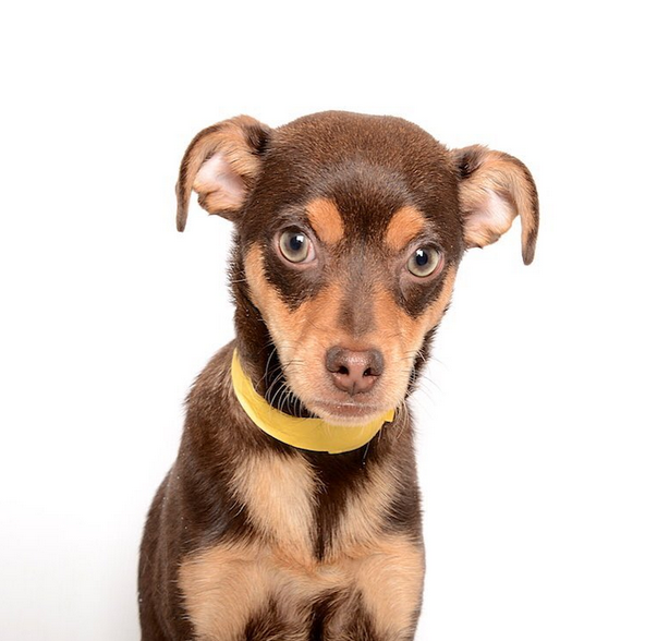 Dogs like this one are being adopted because of new photo both. Photo courtesy Instagram.com/humanesocietyofutah
