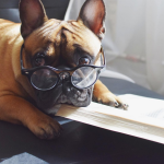 This French Bulldog Will Steal Your Heart