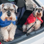 Hit The Road This Summer With Your Small Dog