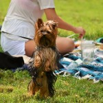 Four Ways to Keep Your Small Dog Safe on July 4th