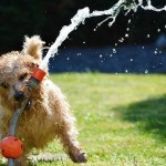 How to Prevent Heat Stroke in Your Small Dog