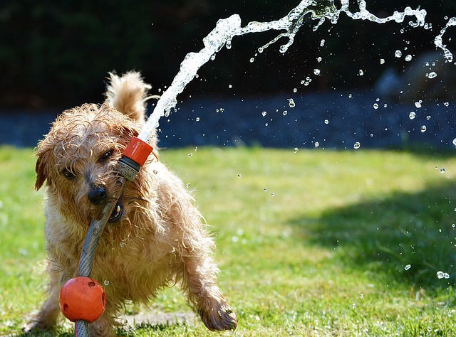 There are several ways you can keep your dog cool this summer and void a heat stroke.