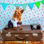 Spoil Your Small Dog in These Top Hotels