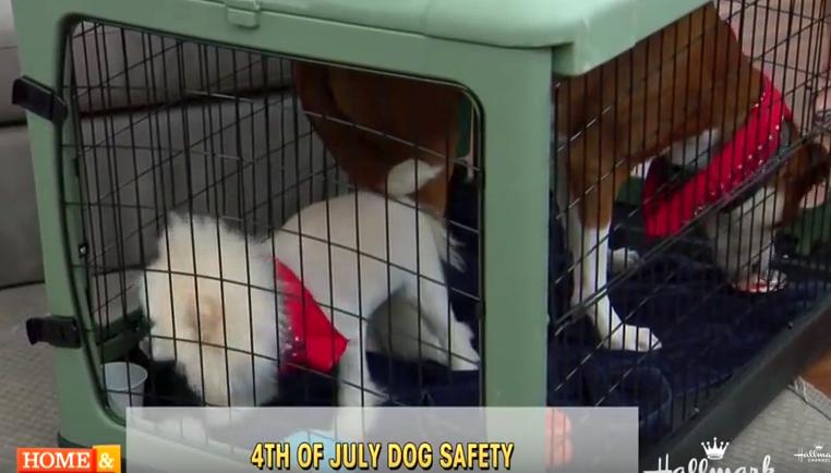 FourthofJuly-pet-safety