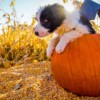 cutest puppies dressed them up in Halloween Costumes