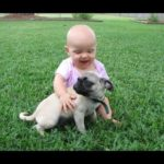 Funny Pug and Baby Video Compilation