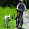 Safely Biking With Your Dog with Springer Dog Exerciser