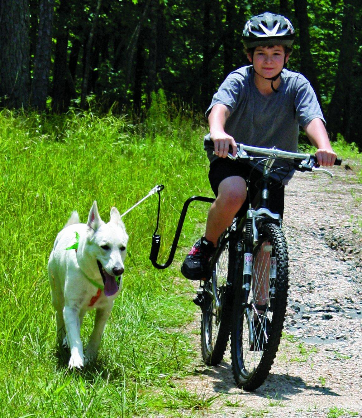 Safely Biking With Your Dog with Springer Dog Exerciser