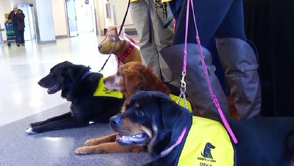 Airport Pet Therapy Program from Paws of CNY