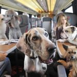 Research Shows Two-Thirds of Pet Owners Miss Out on Travel Because of Separation Anxiety