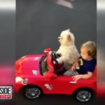 Dog Drives Adorable Little Boy In Red Car
