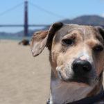 Top 8 Dog Friendly Restaurants in San Francisco, CA