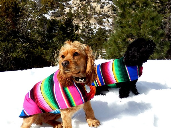 Handmade Dog Poncho from Authentic Mexican Blanket