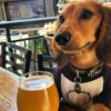 The Brew Project Dog Friendly Restaurants in San Diego