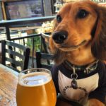 Top 7 Dog Friendly Restaurants in San Diego, CA