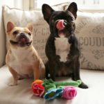 7 Valentine's Day Gifts For The Ultimate Dog Lover In Your Life