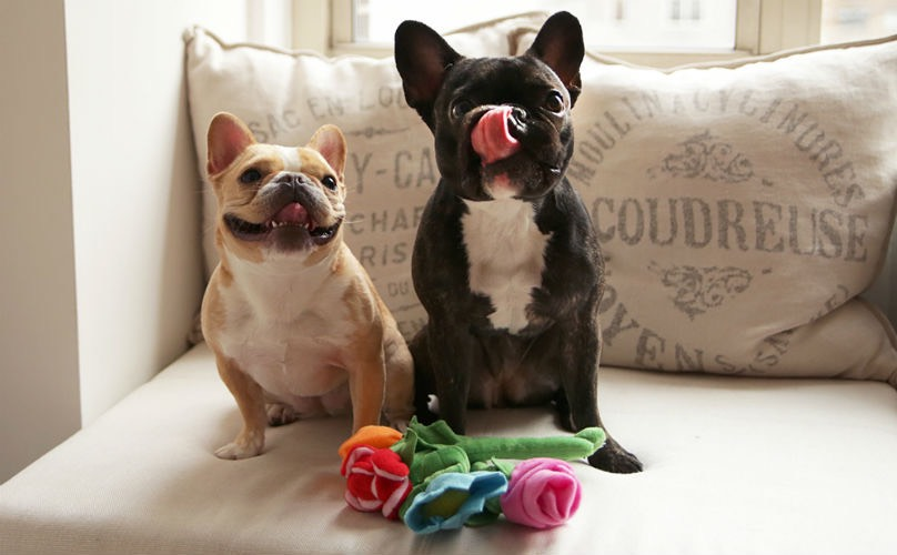 Valentine's Day Gifts For The Ultimate Dog Lover In Your Life