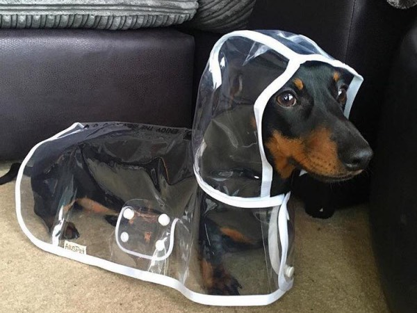 Waterproof Puppy Raincoat