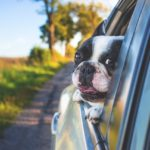 5 Things to Remember When You Are Traveling With Your Small Dog