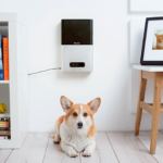 Petcube Bites: Treat & Care for Your Dog Remotely