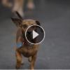 Luxury Dog Boarding