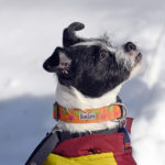 Benefits and The Essential Tips For Hiking With Small Dogs