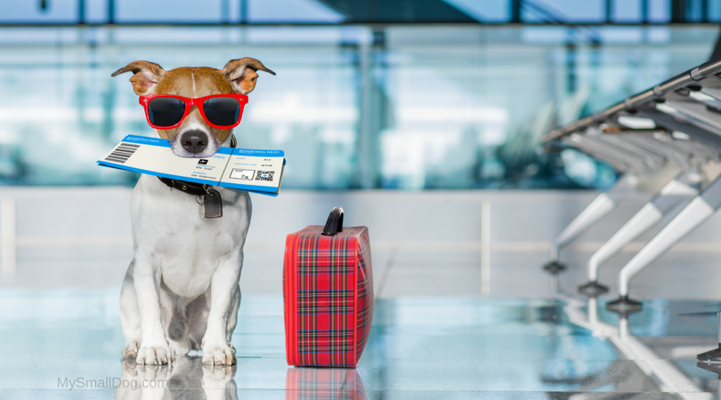 10 Things You Need To Know If You're Flying With Your Dog